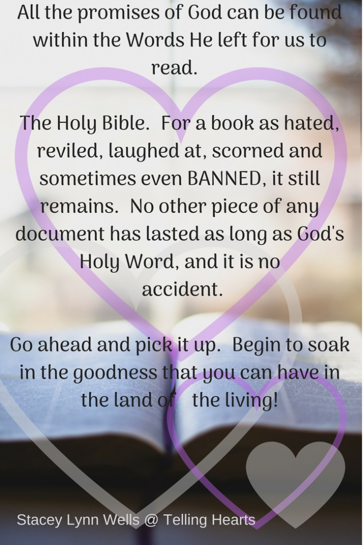 All the promises of God can be found within the Words He left for us to read. The Holy Bible. For a book as hated, reviled, laughed at, scorned and sometimes even BANNED, it still remain