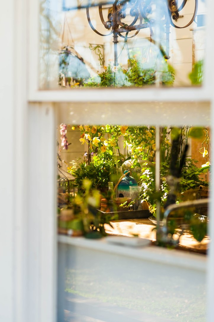 Plants Through Window
