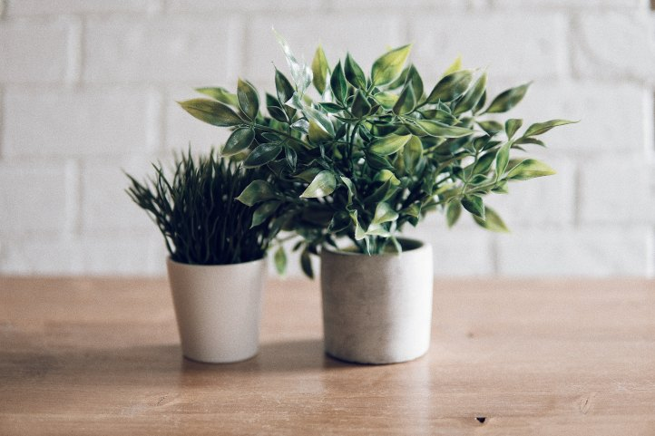 Two Potted Plants White Brick Backdrop
